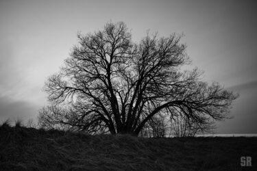Willowing Iconic Tree Long Dock Southampton Ontario Art Photo Print