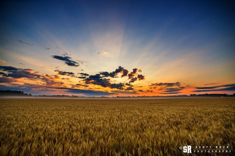 Rural Bruce County Wheat Field Sunrise Wall Art