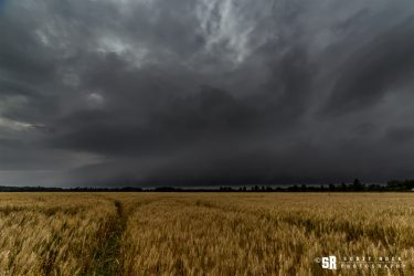 storm over wheat field in rural ontario