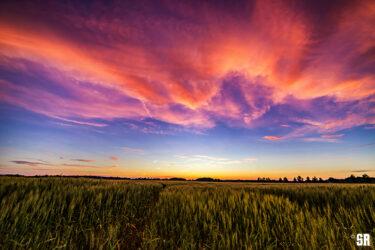 Sorbet Skies Fine Art Wall Print of Sunset over Farm Field in Rural Ontario