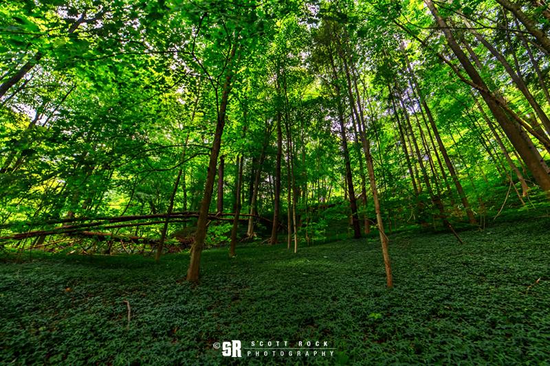 Green Summer Forest Trees near Bruce Peninsula & Georgian Bay