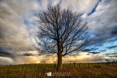 Tree of Dreams Storm Landscape Art Near Bruce Peninsula