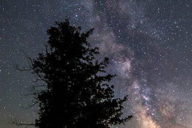 Milky Way Over Tree Near Bruce Peninsula Ontario